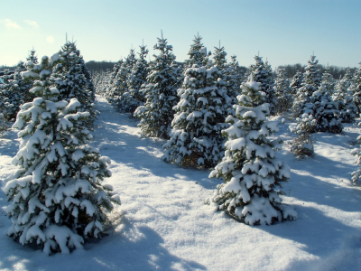 Christmas Holiday Tree Fram with Snow