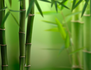 Bamboo - Sustainable Resouce